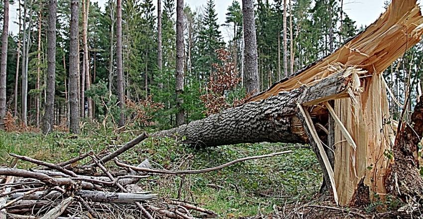 drzewo połamane